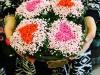 0505-kvety