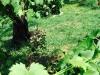 blog-echinacea (7)