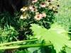 blog-echinacea (8)