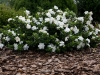 blog-gardenia