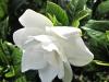 blog-gardenia1_uvod