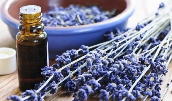 1-lavender-garden