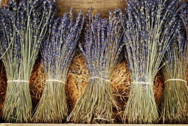 dry_lavender