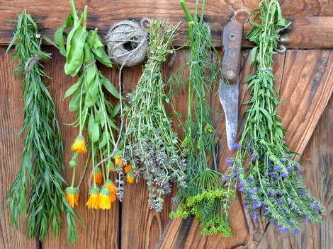 Výsledok vyhľadávania obrázkov pre dopyt bylinky v kytici