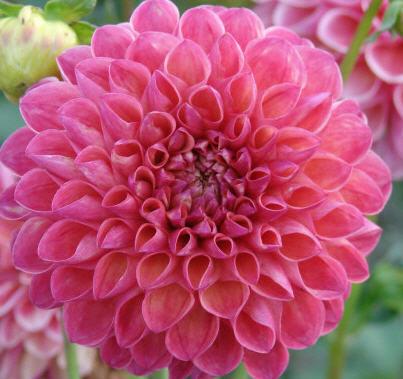 Kvetina datovania