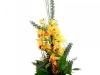 orchidea-kytica