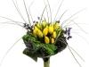 blog-tulip01
