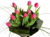 blog-tulip04