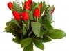 blog-tulip05