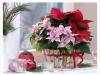 vianocna-ruza-004