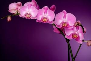 blog_csk_orchidea