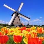 blog_csk_tulip