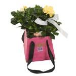blog-gardenia3