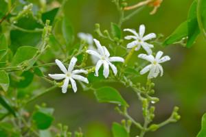 7 kvetov do spálne, s ktorými sa vám bude lepšie spať