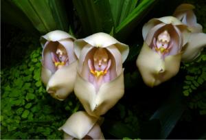 12 zaujímavých kvetov, ktoré kvety ani nepripomínajú