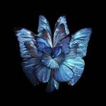 Kvet-motýľ