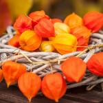 Aranžovanie sušených kvetov