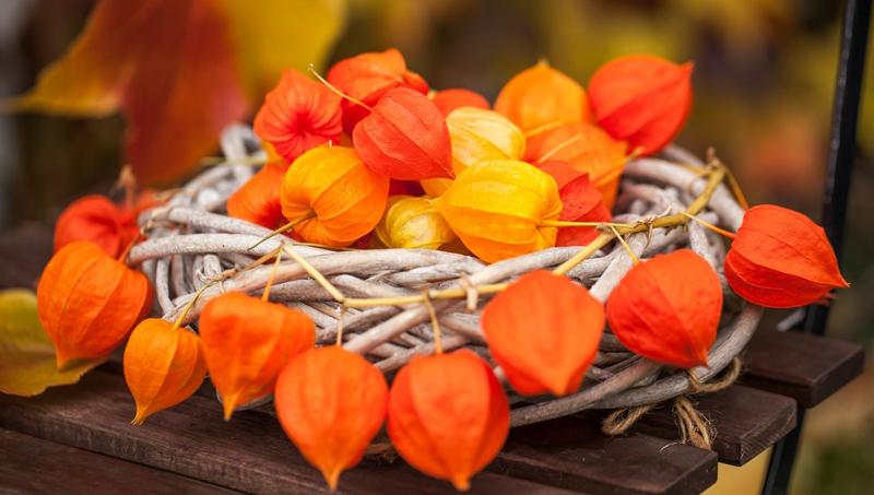 4 spôsoby ako využiť sušené kvety