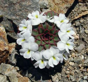 symetricky-kvet-10