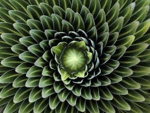 symetricky-kvet-12