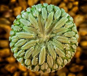 symetricky-kvet-13