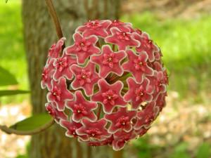 symetricky-kvet-14