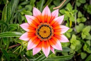 symetricky-kvet-17