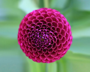 symetricky-kvet-4