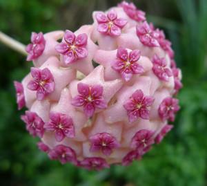symetricky-kvet-5