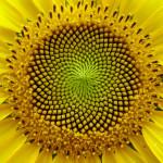 symetricky-kvet-7