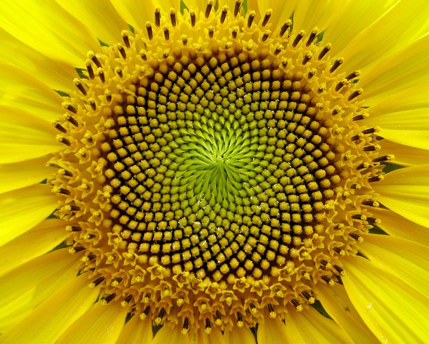 17 fotiek kvetov pre milovníkov symetrických tvarov