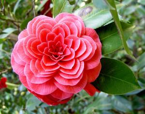 symetricky-kvet-8