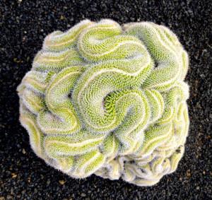 symetricky-kvet-9