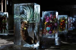 Kvety v ľadových kockách