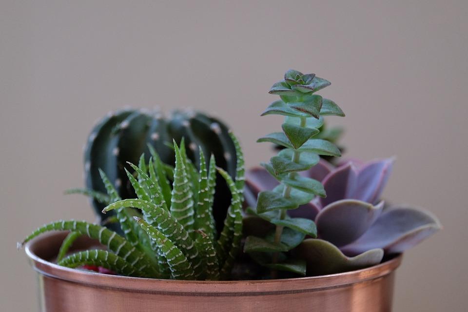 7 interiérových rastlín, ktoré nezničíte